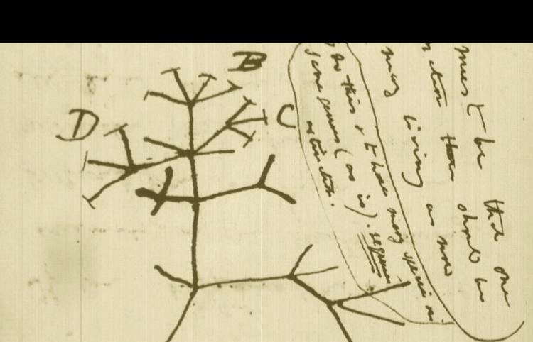 Phylogenetics and Molecular Evolution